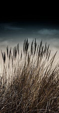 natural wheat | #sky #dusk #emotion #photography #design #inspiration <<< repinned by www.BlickeDeeler.de
