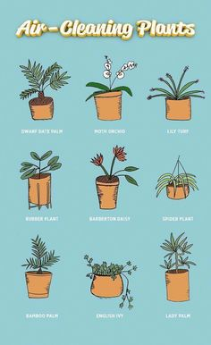 The beds are made and the dishes are done but theres always more to clean - Air Bed - Ideas of Air Bed AirBed - The beds are made and the dishes are done but theres always more to clean like the air for instance. We rounded up nine plants that give your h Indoor Garden, Indoor Plants, Dorm Plants, Hanging Plants, Indoor Trees, Lily Turf, Decoration Plante, Spider Plants, Bathroom Plants
