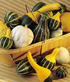 Ornamental Small Fancy Mixed Colors Gourd Seeds and Plants, Vegetable Gardening at Burpee.com