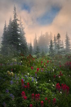 Her own hideaway||| Mt. Rainier NP, Washington Perri Schelat