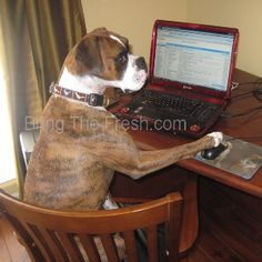 Where are These So Called Doggie Dating Sites more see image link Make Money From Home, Make Money Online, How To Make Money, Panic Attack Treatment, Making Money On Youtube, Funny Animals, Funny Pets, Self Help, Dating