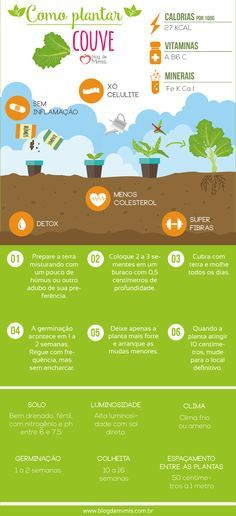 Como plantar couve e                                                                                                                                                                                 Mais Home Vegetable Garden, Herb Garden, Orchids Garden, Garden Plants, Grow Home, Farm Lifestyle, Urban Agriculture, Green Garden, Green Life
