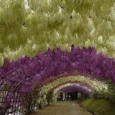 Kawachi Fuji Gardens - Japan