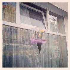 Giving your bird the fresh air it deserves Foto: Kwinten Lambrecht