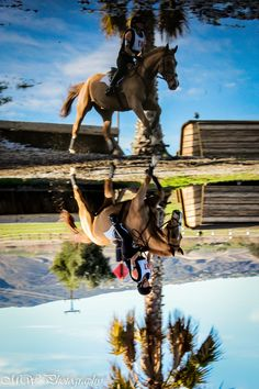 Wild horses I want to be like you: Photo