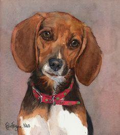 Lucy - English Pocket Beagle