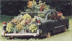 HA! Everyone thought I was joking to plant flowers in my Hubbys old cars!!! SEE!!! Im not the only one =D
