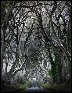Antrim, Ireland-The Dark Hedges