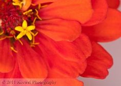 How to Take Incredible Photographs of Flowers