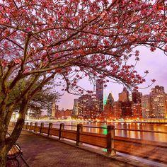 Roosevelt Island by @gigi_nyc #newyorkcityfeelings #nyc #newyork