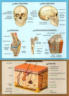 Human Body, Knowledge, Language, Education, Learning, Health, Tela, Anatomy, Consciousness