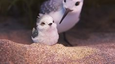 Piper – New images from the Disney Pixar animated short. Pics & details here