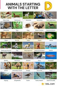 Animals that Start with D List Of Animals, Animals Of The World, Animal Species, Bird Species, Male Duck, Crocodile Animal, Dik Dik, Doberman Pinscher Dog, Wild Dogs