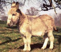The Farmer's Donkey: A Fable for Our Time
