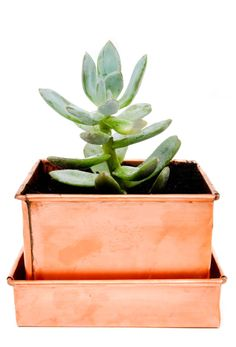 LEIF Copper Patina Planter // Fact: Succulents make great gifts, especially when they come packed in a darling copper planter. Cactus, Copper Planters, Planter Pots, Planter Ideas, Tiny Furniture, Holiday Gift Guide, Holiday Gifts, Messing, Houseplants