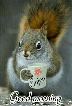 Good morning everyone ☀️😃☕️ Have a great day 🥰🤗🤩 Good Morning Husband, Good Morning Wednesday, Good Morning Post, Good Morning Funny, Good Morning Friends, Good Morning Wishes, Good Morning Images, Cute Morning Quotes, Good Morning Beautiful Quotes
