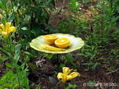 """Attract butterflies: """"Butterflies LOVE oranges and bananas!  In another shallow garden sculpture we keep cut oranges and bananas.  They come in droves!  If you are worried about ants just put a small puddle of water below the fruit—and the ants will drown before reaching it."""""""