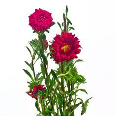 Matsumoto red 60 stems - 3 blooms per stem $112