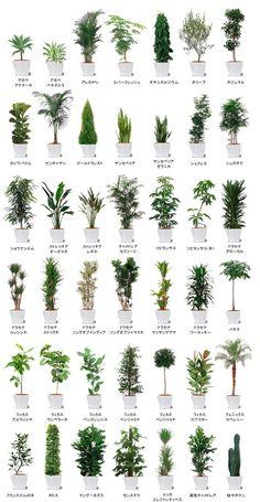 Backyard Garden Design, Terrace Garden, House Plants Decor, Plant Decor, Faux Plants, Indoor Plants, Indoor Trees, Bamboo Garden, Garden Images