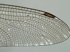 Image result for wing cell pattern