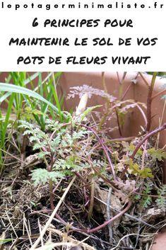 Créer un sol vivant dans un pot de fleurs ce n'est pas très difficile. Par contre, faire en sorte de la garder en vie, c'est une autre paire de manche… Permaculture, Pot Plante, Pots, Planters, Garden, Underground Living, Root System, Organic Matter, Sunflowers