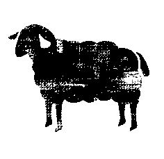 This is a simple sheep logo that appears on the maps in our handy guide to buying fresh food from producers called Farmgate SA.  It was designed for us by graphics whizz Ed Schillace and I love it. You can purchase Farmgate SA from the Advertiser News Shop at 31 Waymouth Street, city, or order it direct from authors Chris Stephan and Dianne Mattsson here: http://www.thefoodbirds.com/site/order.php
