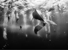 Foto: © Anuar Patjane Floriuk /National Geographic Traveler Photo Contest.