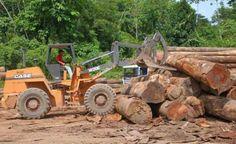 Amazônia perdeu 128 campos de futebol de floresta por hora em 2016, maior desmatamento desde 2008