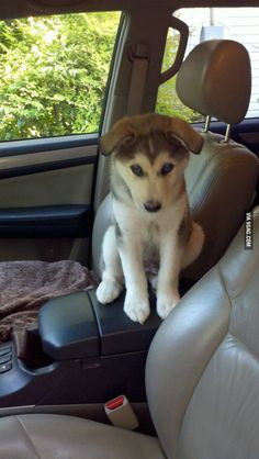 His first car ride. He hasn't quite figured out where to sit yet.
