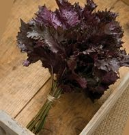 """Red Shiso (Perilla frutescens):  """"Distinct cinnamon/clove flavor and aroma, with the spiciness of cumin. Used in oriental cooking, sushi and salad mix. Red Shiso colors radish pickles and """"umeboshi"""" plums."""""""
