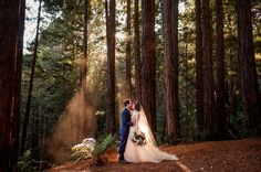 WaterFall Lodge Wedding Love BettyJonathan Fairytale Wedding site in the Redwoods. WaterFall Lodge in Ben Lomond, near Santa Cruz. Lodge Wedding, Forest Wedding, Woodland Wedding, Woodland Forest, Woodland California, Redwood Forest California, Magical Wedding, Perfect Wedding, Dream Wedding