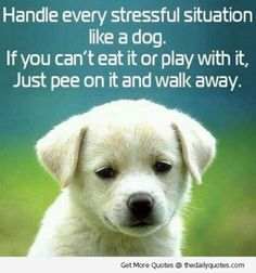 Looking for funny dog quotes to make your dog lover friends howling? Lighten your day and have a good chuckle, Like/Share/Pin your favorite funny dog quotes! Funny Dogs, Funny Animals, Cute Animals, Baby Animals, Wild Animals, Dog Quotes, Funny Quotes, Life Quotes, Dog Sayings
