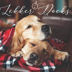 Genesis 28 15, Goeie Nag, Good Night Quotes, Morning Greeting, Christmas Animals, Afrikaans, Cute Quotes, Wisdom Quotes, Cute Puppies