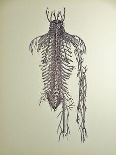 1950 Human Circulatory System Original Vintage Anatomy Vesalius Art Illustration Print on Etsy, ¥1,063.83