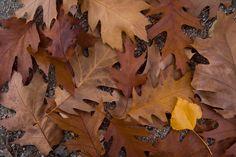 Semana 3. El otoño ya está aquí.