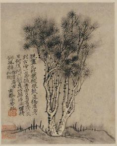 Shitao (1642-1707) Vieux pin à Xufu de l'album Souvenirs de Nankin, 1707. Feuilles d'album, encre et couleur sur papier. H. 30.8 cm, L. 22.6 cm. Washington, D. C., Arthur M. Sackler Gallery, Smithsonian Institution: gift of Arthur M. Sackler, inv. S1987.204.8