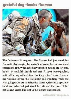 Unsung Hero's! Dogs are true heroes, they are unconditionally loving and true sweet souls that are creatures of God!! Look at this!