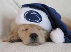 PSU Puppy!