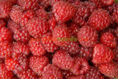 Raspberry, Home And Garden, Gardening, House, Travel, Garden, Agriculture, Plant, Viajes