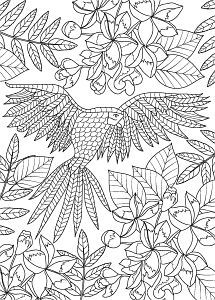 Find Hand Drawn Bird Coloring Page stock images in HD and millions of other royalty-free stock photos, illustrations and vectors in the Shutterstock collection. Thousands of new, high-quality pictures added every day. Butterfly Coloring Page, Bird Coloring Pages, Adult Coloring Pages, Coloring Books, Illustration, How To Draw Hands, Royalty Free Stock Photos, Watercolor, Pictures