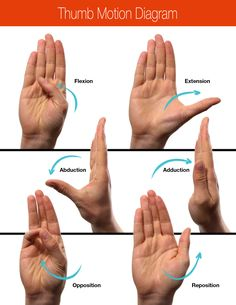 Thumb-Motion-Diagram-Large.jpg (2550×3300)