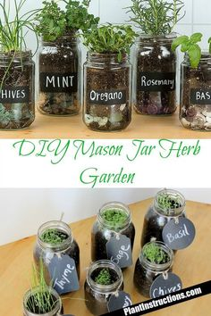 Tremendous Herb Gardening The Many Good Things About It Ideas - Gardening Herb Mason Jar Herb Garden - Wanna have a windowsill full of herbs all year round? Look no further than this DIY mason jar herb garden that . Mason Jar Herb Garden, Mason Jar Herbs, Pot Mason Diy, Diy Herb Garden, Mason Jar Crafts, Garden Plants, Mason Jar Planter, Herb Garden Design, Backyard Plants