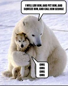 This pic is real. A polar bear came for multiple days to play with the dogs of a sled team. When the bear first arrived the owner of the dogs thought they were goners. Never once did the bear harm the dogs. Cute Baby Animals, Animals And Pets, Funny Animals, Wild Animals, Funny Dogs, Arctic Animals, Funny Husky, Polar Bears Live, Baby Polar Bears