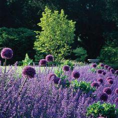 lavender and allium