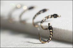Midge Larvae | midge larva a close up of one of my favorite midge larva patterns all ...