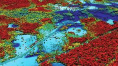 A scan produced by Gregory Asner's airborne, laser-and-spectrometer-equipped lab. Beautiful Forest, Plant Species, Biomes, Environmental Science, Urban Planning, Four Seasons, Ecology, City Photo, Around The Worlds
