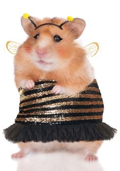"Meet ""honey,"" our sassy bee costume for hamsters!"