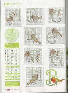 Gallery.ru / Fotografia # 9 - Bullfinches robin pettirossi - Mosca