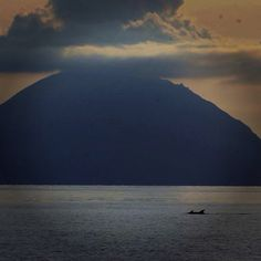 Dolphins near Filicudi while sailing in the Aeolian Islands, Sicily, Italy with Il Miglio Blue