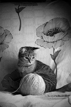 Cat Heaven. A gigantic ball of yarn....